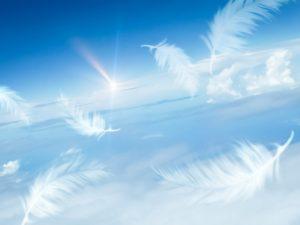 空に舞う羽